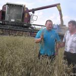"""Хорошее зерно – высокая урожайность. В следующем году на Сенненшчыне посеют больше """"элиты"""""""