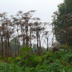 Растительные «оккупанты» наступают