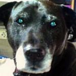 Собака стал номинантом на спецнагороду за то, что спас своего хозяина