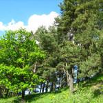 На Сенненщине стартовала «Неделя леса»