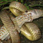 В джунглях Азии живут летающие змеи. Видео