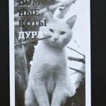 Бездомные коты позировали для «антигламурного календаря». ФОТО