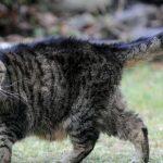Самой старой кошке в мире — 39 лет