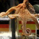 Немцы создали мавзолей осьминога-прорицателя Пауля
