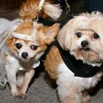 Работники приюта женили неразлучных собак