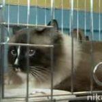 В России провели фестиваль беспородных животных