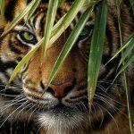 Индусы спасли тигра, которого нашли в заброшенном колодце