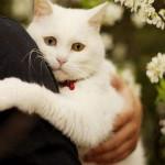 Американец отпугивал котов самодельными бомбами