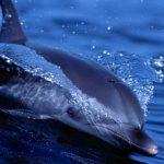 300-килограммовый дельфин запрыгнул в прогулочную лодку