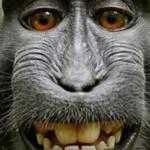 Макака устроила фотосессию в джунглях Индонезии