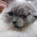 Коту с двумя мордами исполнилось 12 лет