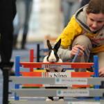 В Швейцарии устроили кроличьи бега