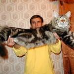 Кот упал на хозяина и обеспечил ему сотрясение мозга