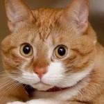 Из американской тюрьмы выселяют более 80 кошек
