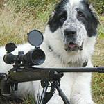 Собака случайно подстрелил хозяина на охоте