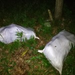 На Волыни пограничники догнали автомобиль, из которого нарушитель выбрасывал телячьи туши