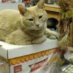 В городке на Аляске 15 лет мэром выбирают кота