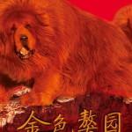 Китайский бизнесмен приобрел собаку Будды за 1,6 миллиона долларов