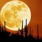 Американцы откроют пиццерию на Луне