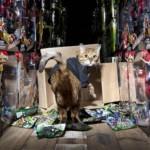 Кошку наняли охранником на склад игрушек