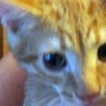 Кот получил прозвище Нацик за трезубец на лбу